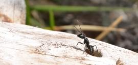Allontanamento formiche