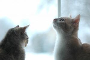 I gatti e le pulci